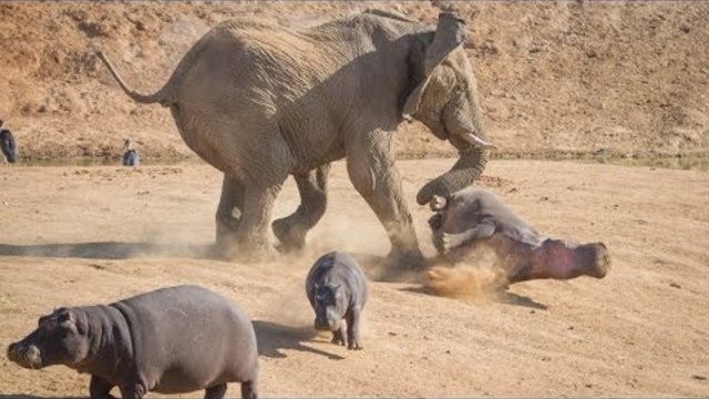 Documentary National Geographic - Animal Attack
