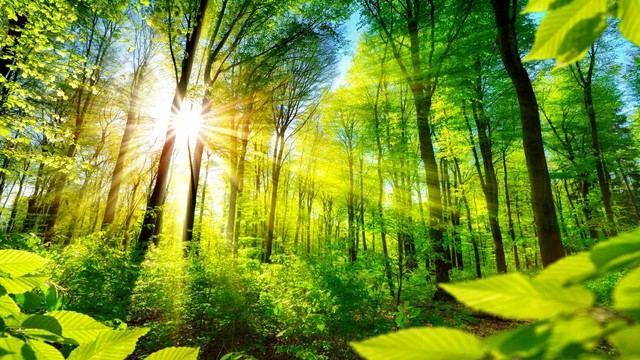 "🌳 Зелено спокойствие! ... (Relaxing music - ""Peaceful Forest"" by Tim Janis) 🌳"