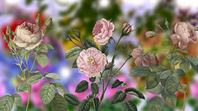 🌹 Digital Art ... Flowers 🌹